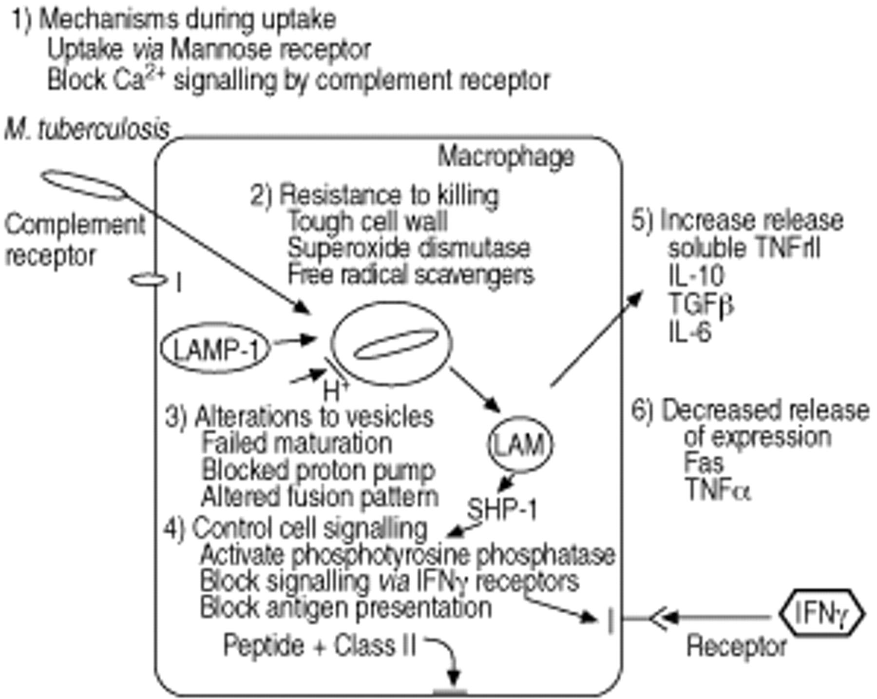 M Tuberculosis Immunology And Vaccination European Respiratory 1796 Cj7 Fuse Box Diagram Download Figure