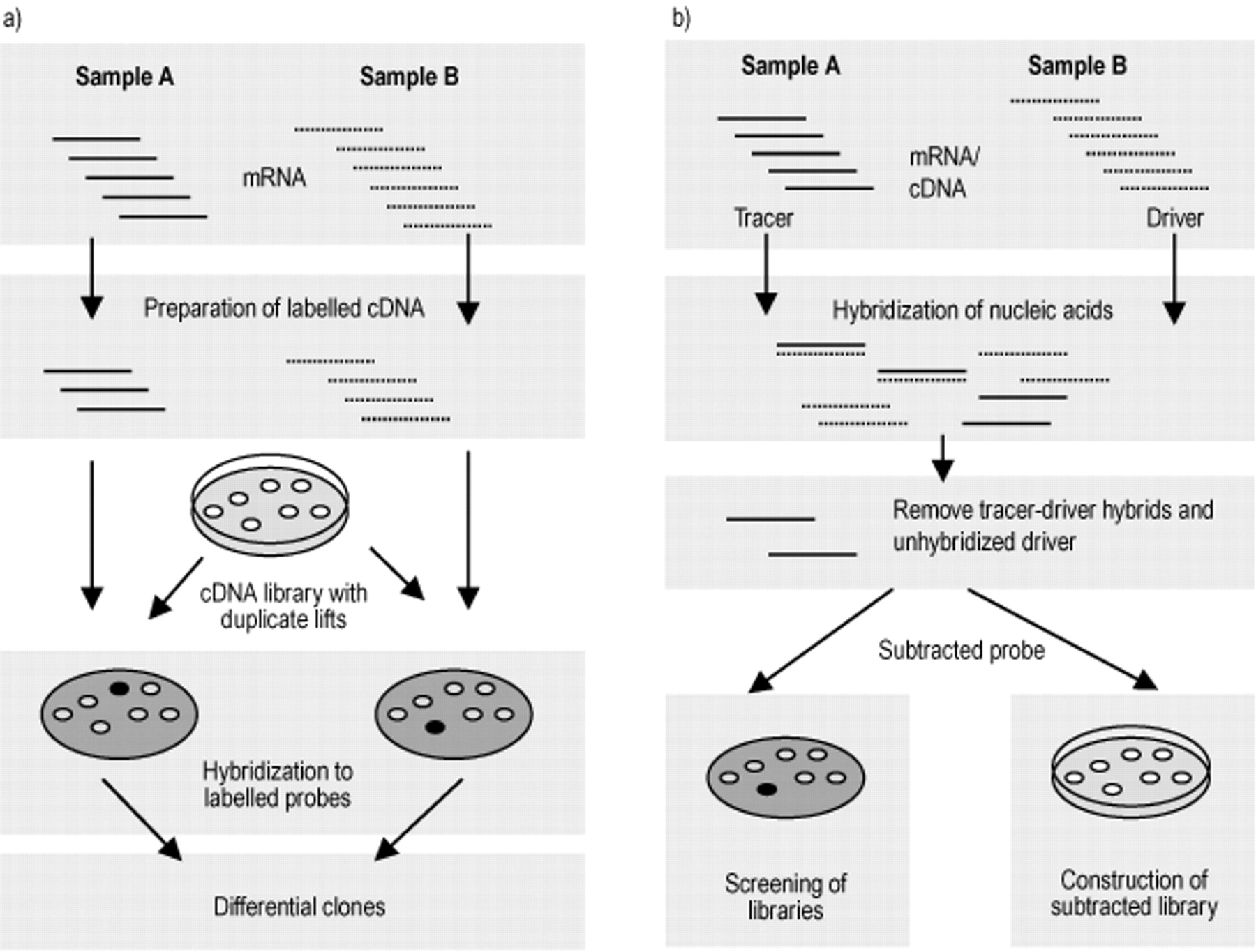 Identification of disease genes by expression profiling