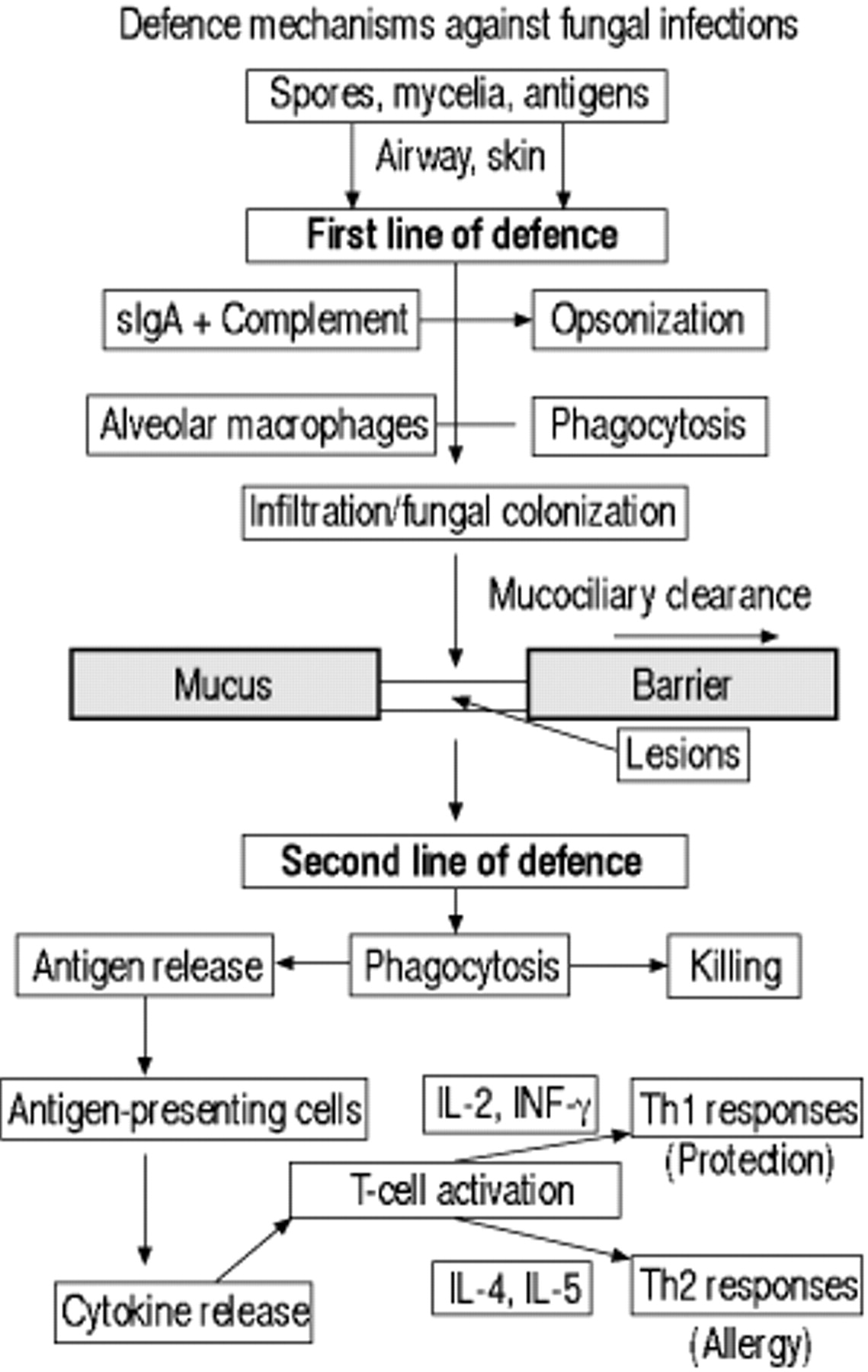 Allergy And Immunity To Fungal Infections And Colonization