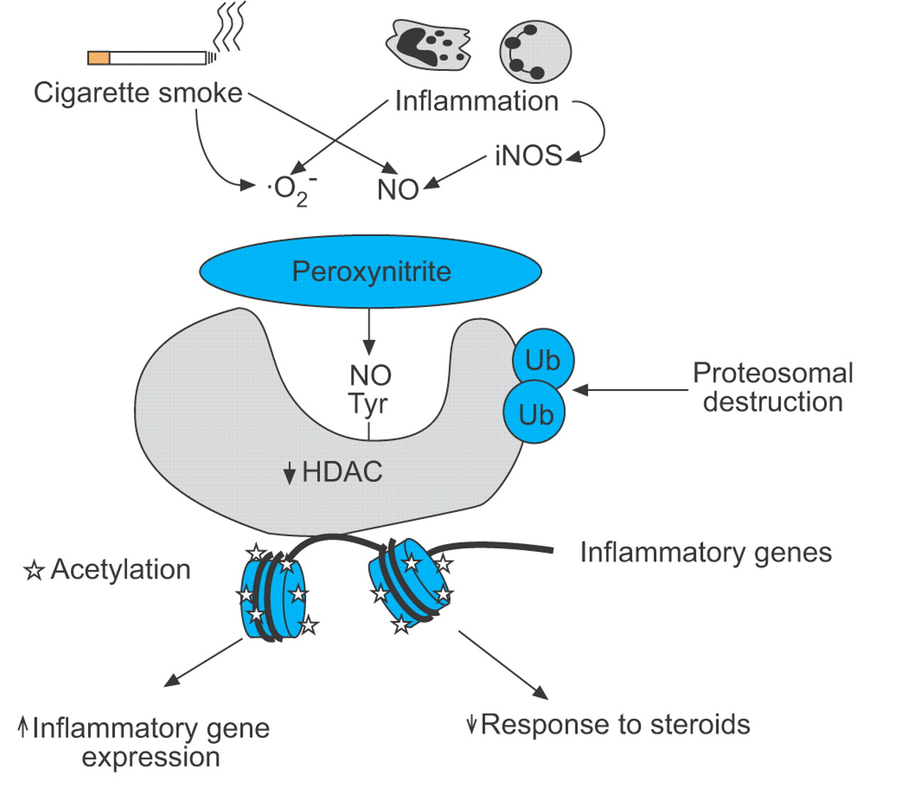 Histone acetylation and deacetylation: importance in inflammatory