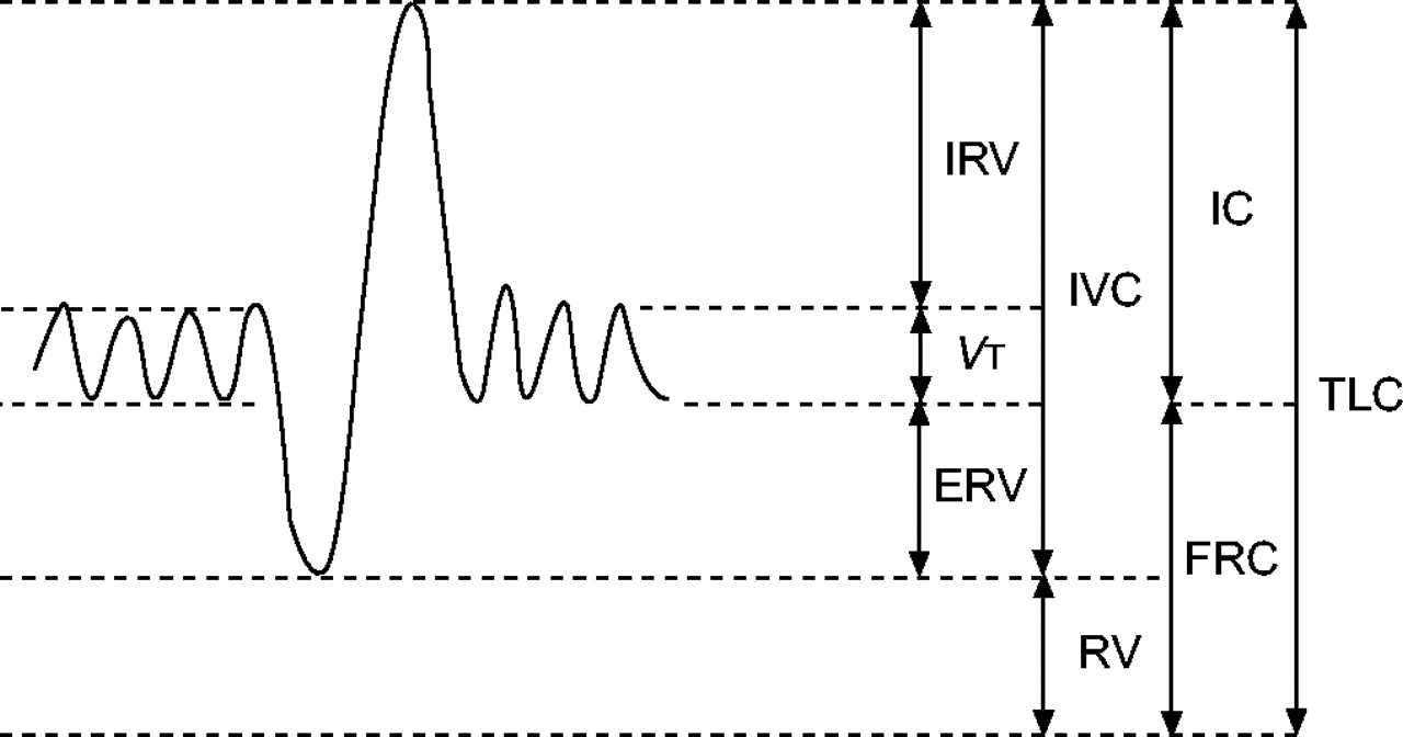 Standardisation of the measurement of lung volumes