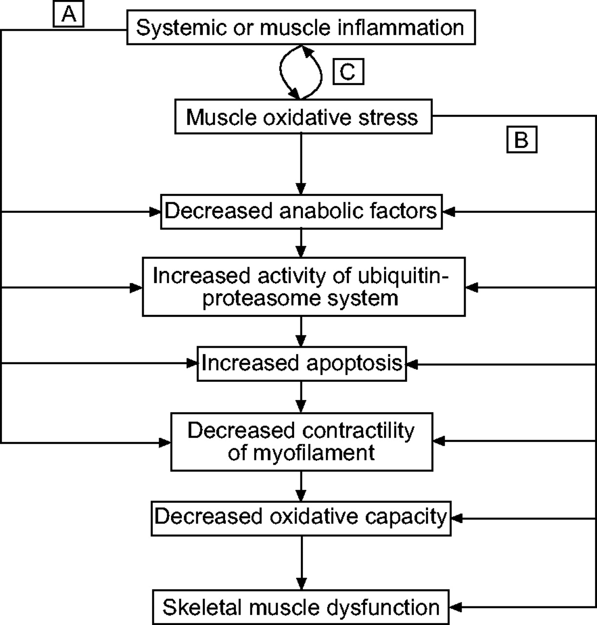 How to increase muscle oxidative capacity