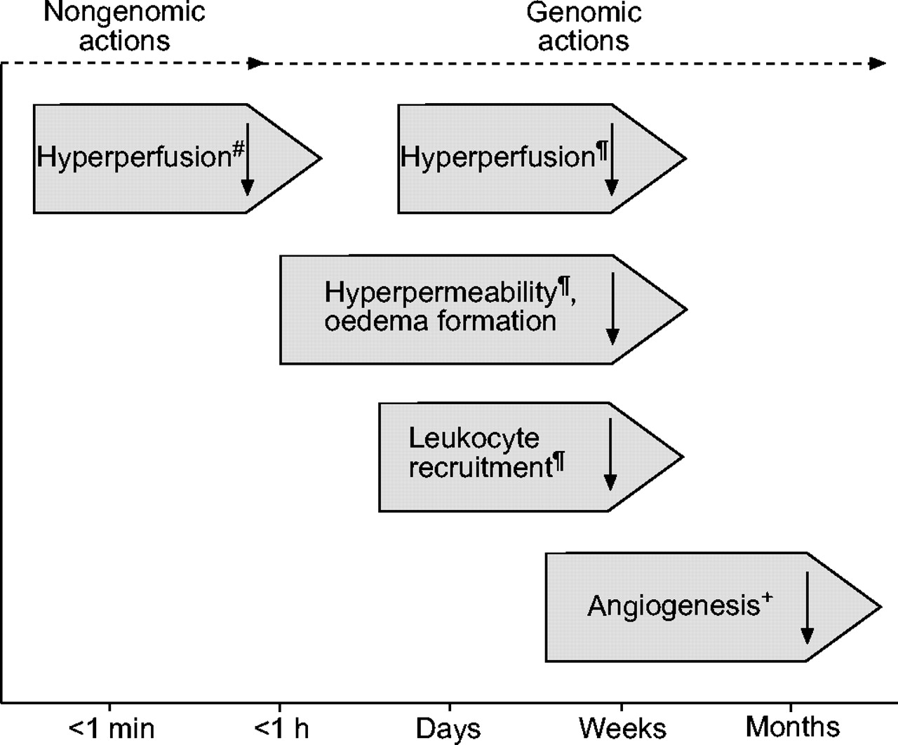 prednisone mechanism of action pdf