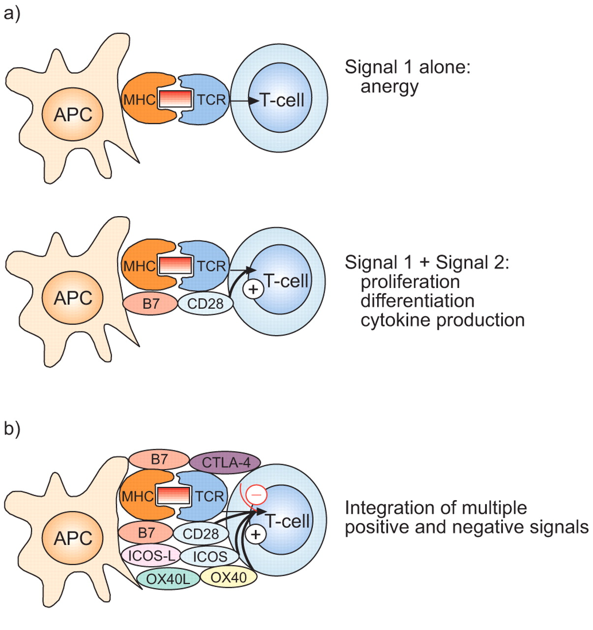 Master Switches Of T-cell Activation And Differentiation
