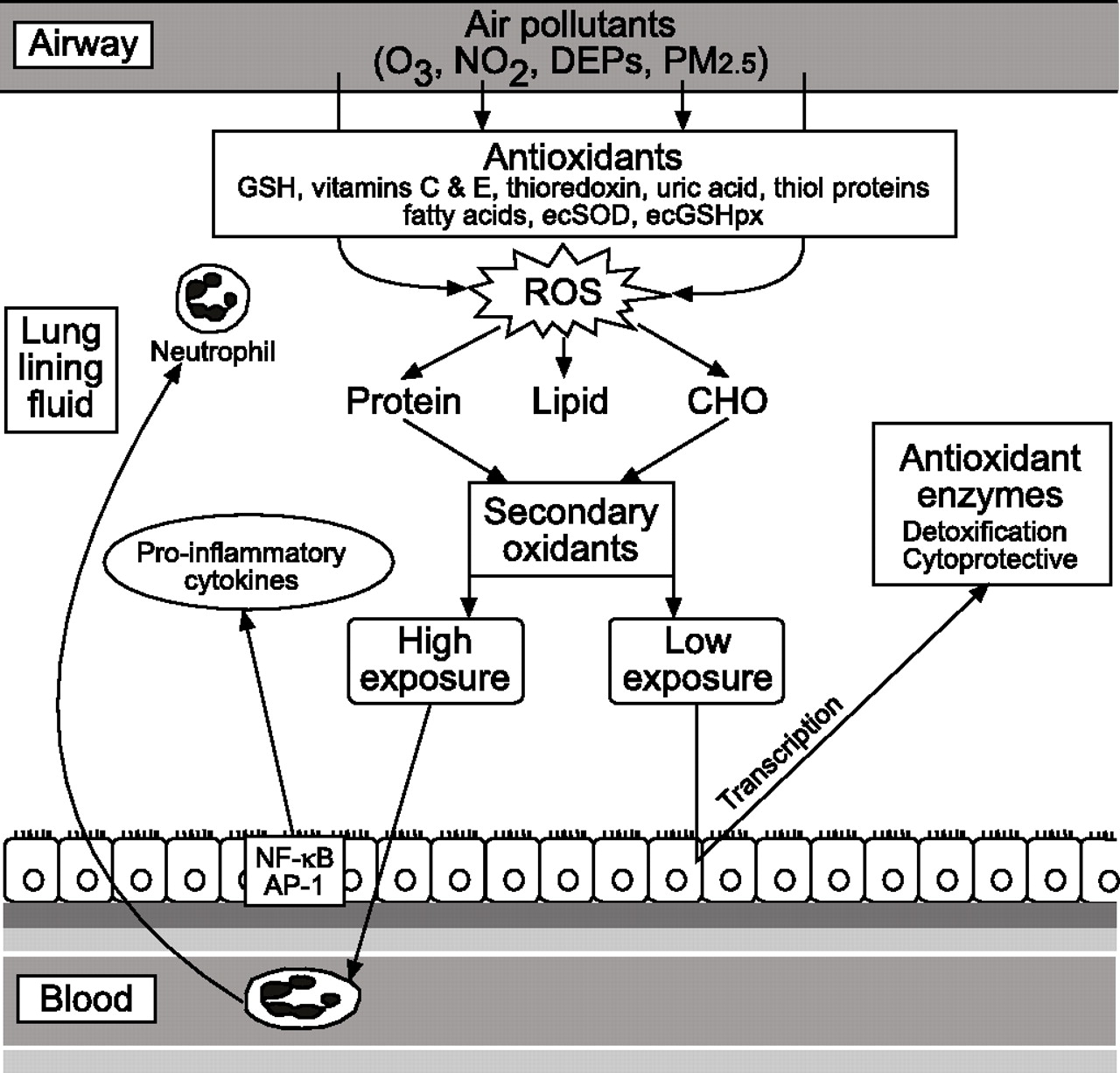 Air Pollution Oxidative Stress And Dietary Supplementation A Diagram Download Figure