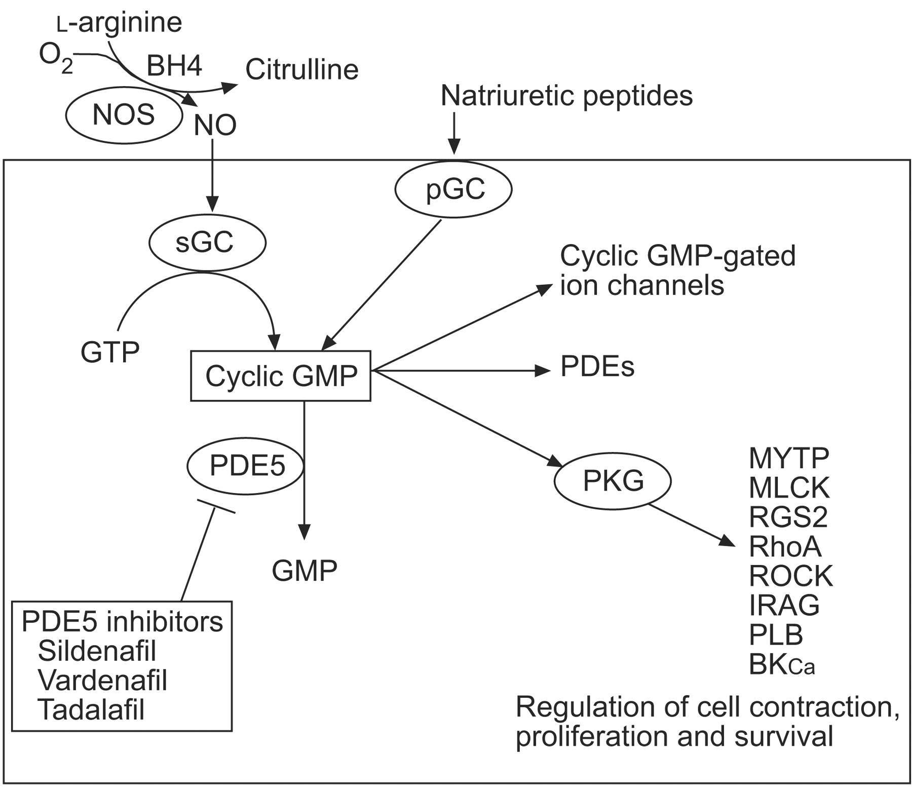 Pde5 inhibitor vardenafil and tadalafil cialis red eyes