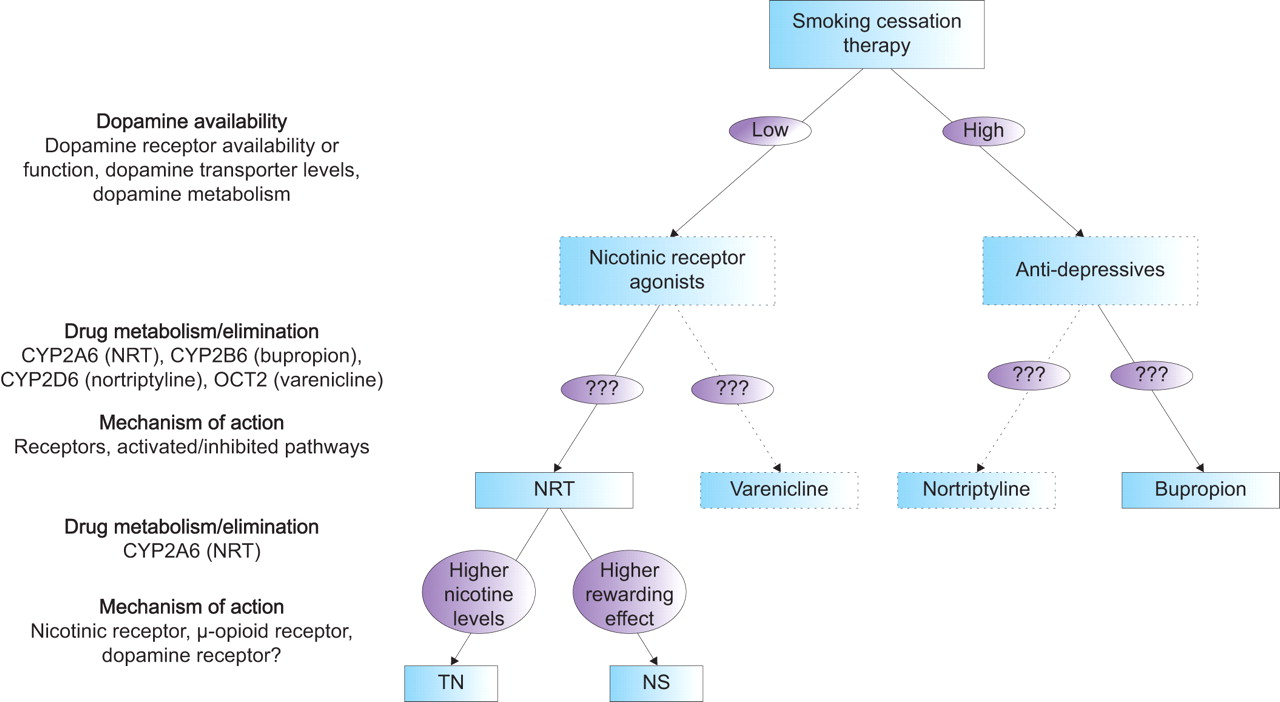 varenicline smoking cessation mechanism