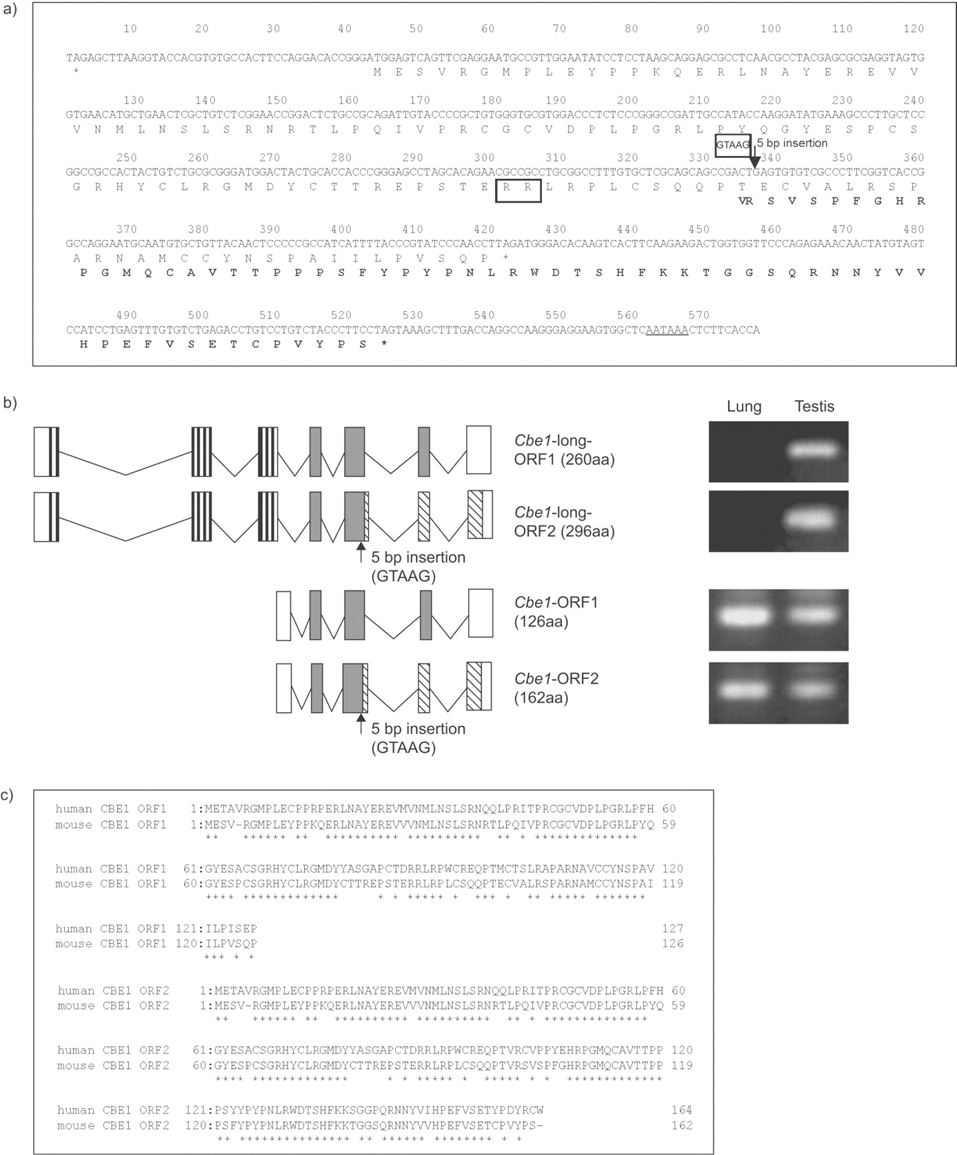Chronological Expression Of Ciliated Bronchial Epithelium 1 During Amino 2000 150 Tabs Download Figure Open In New Tab