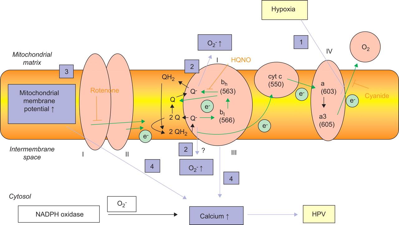Figure 8 European Respiratory Society Oxygen Atomic Structure Diagram Download