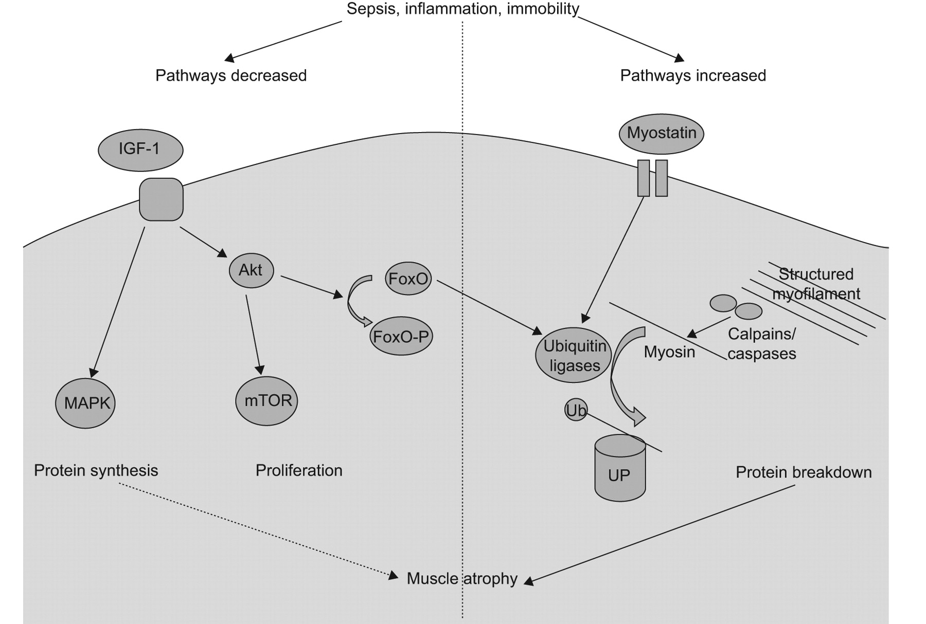 molecular mechanism of sepsis Based on that discovery, published in molecular psychiatry, mayo  the detailed  molecular mechanism underlying the protective effect of.