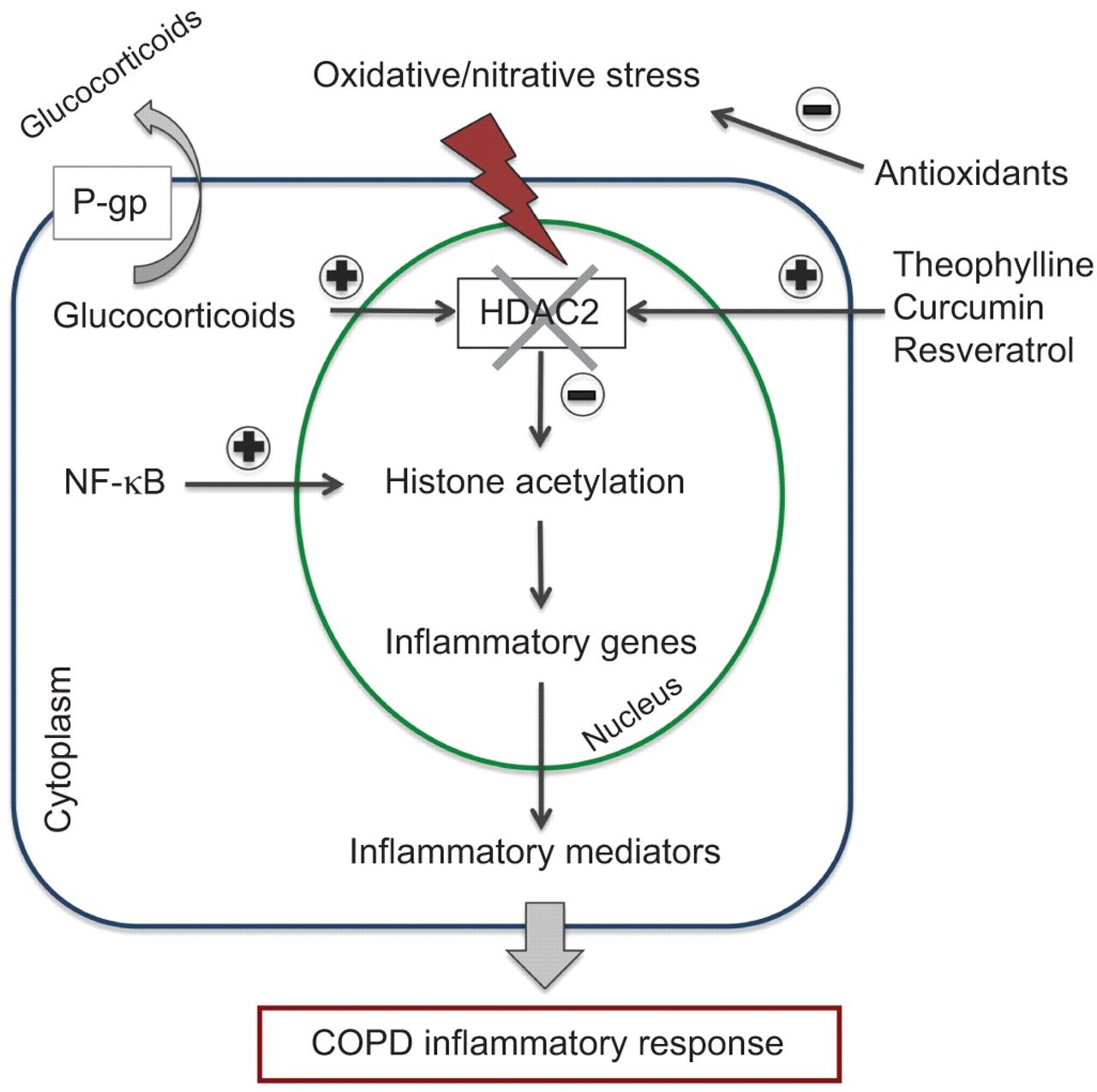 Emerging Anti Inflammatory Strategies For Copd European