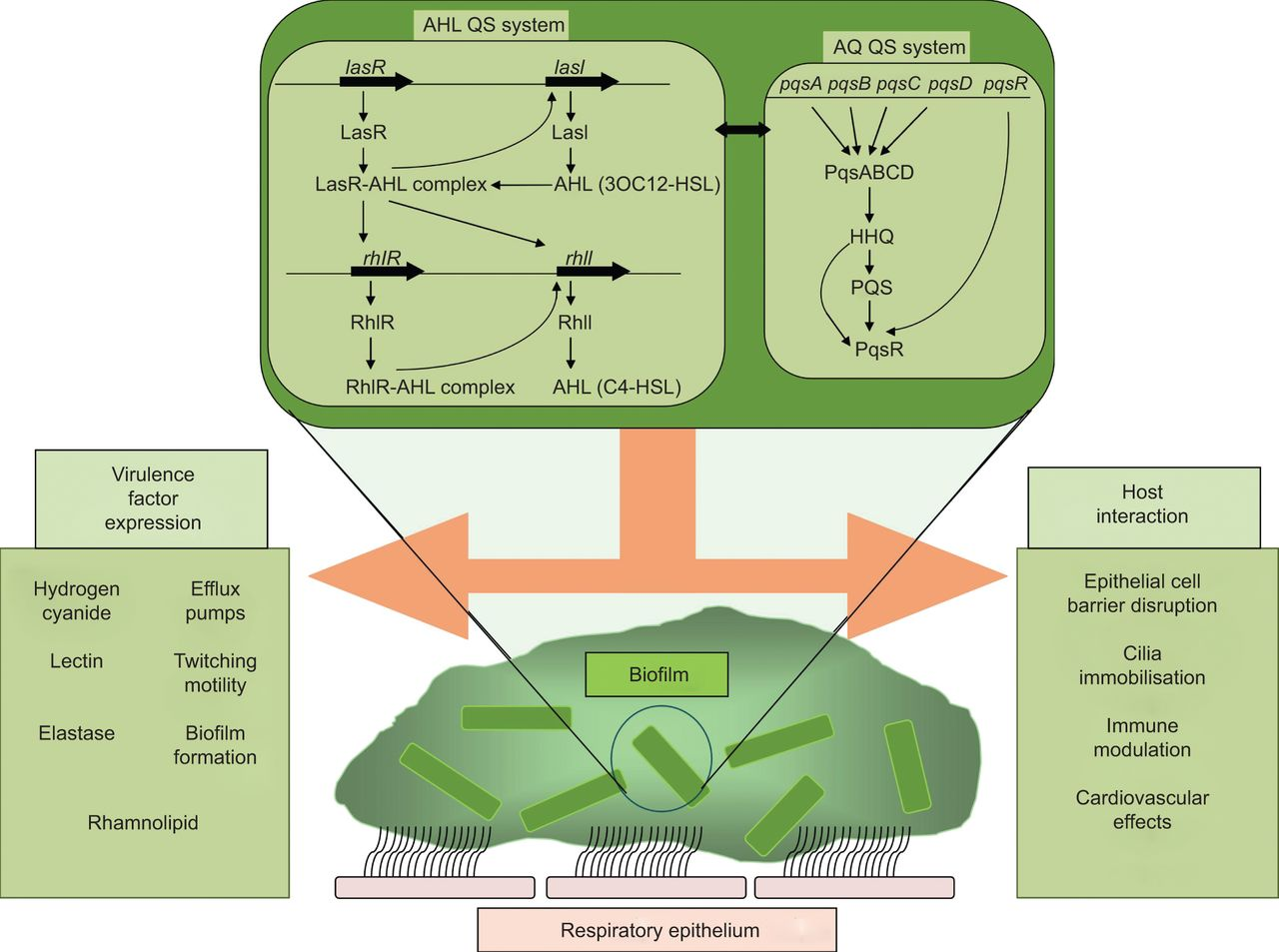 Novel approaches to the treatment of Pseudomonas aeruginosa