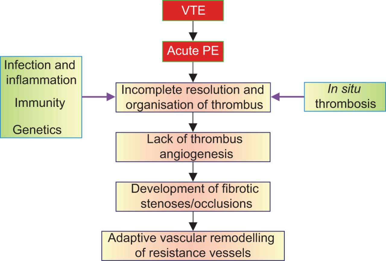 Venous thrombosis mechanism
