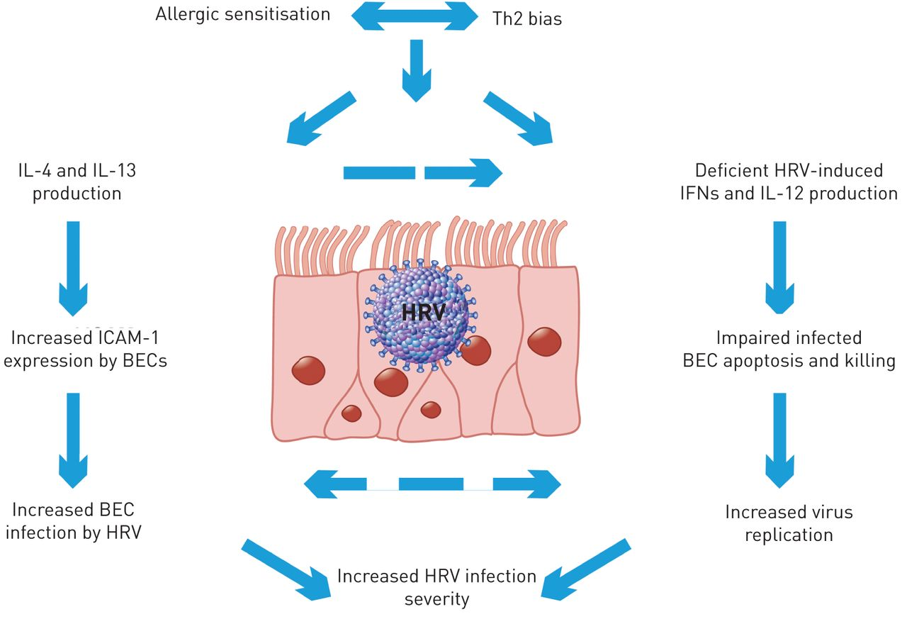 pertussis cell diagram infantile respiratory syncytial virus and human rhinovirus  infantile respiratory syncytial virus and human rhinovirus