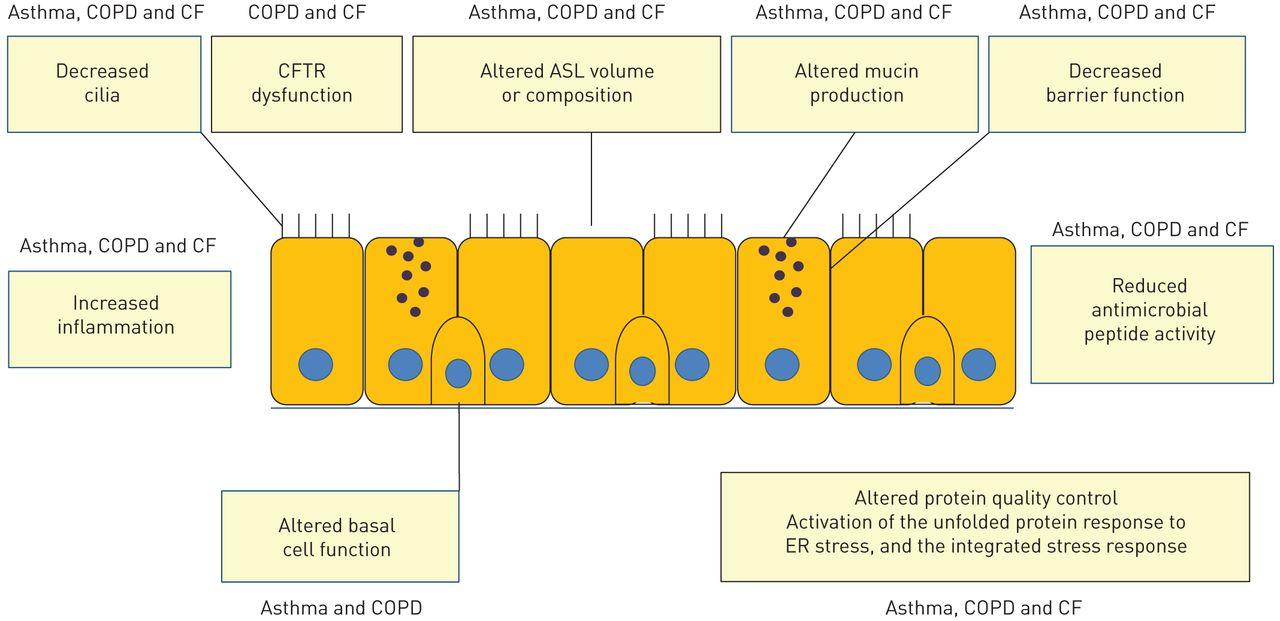The Innate Immune Function Of Airway Epithelial Cells In