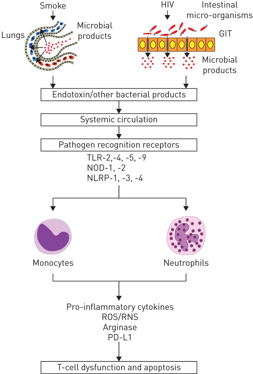 Impact Of Hiv Infection And Smoking On Lung Immunity And Related Disorders