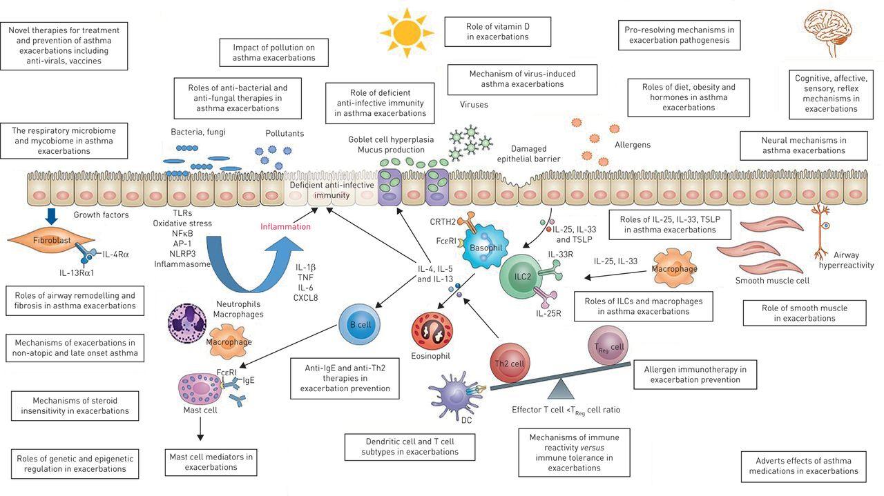 Addressing unmet needs in understanding asthma mechanisms