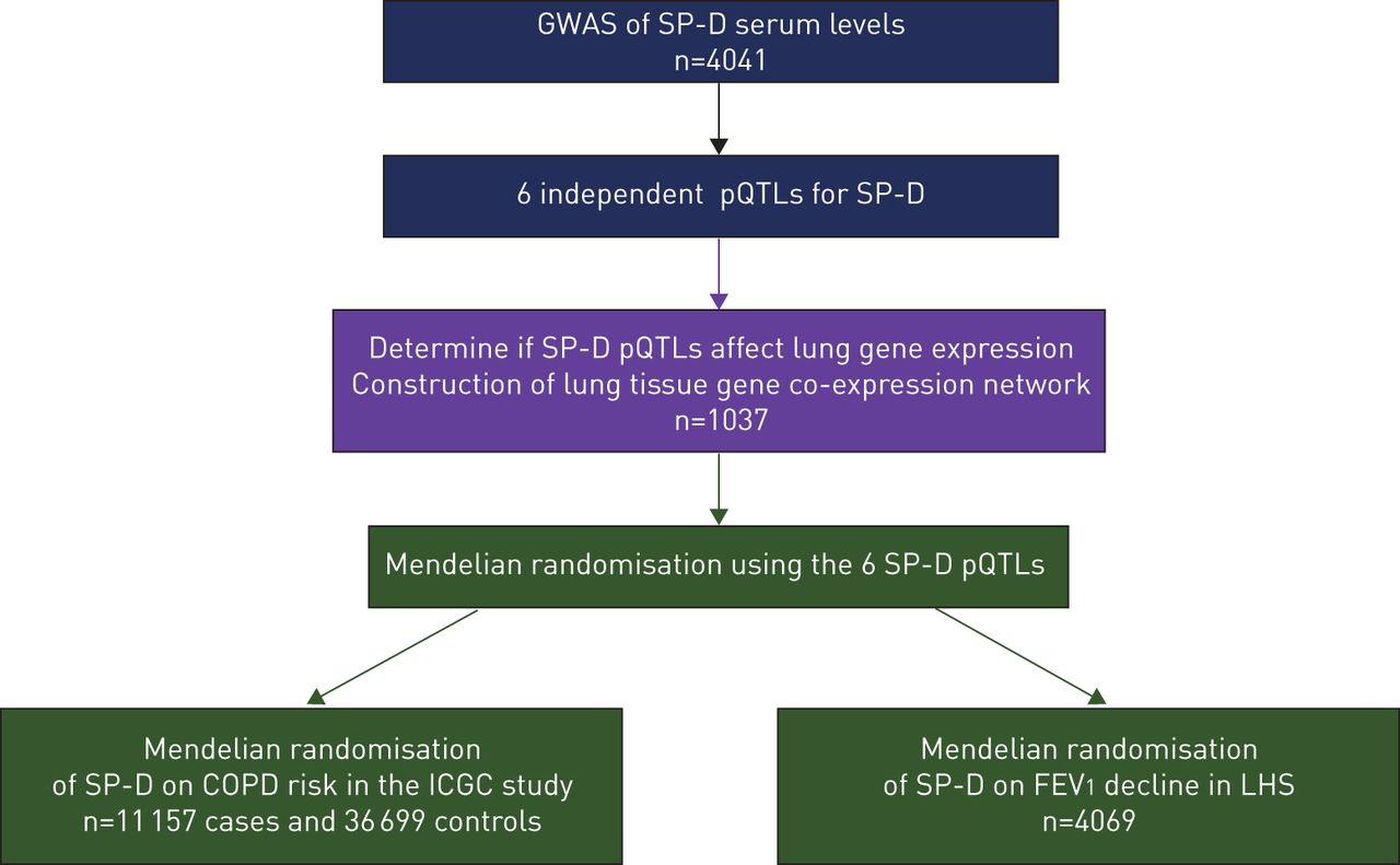 Surfactant protein D is a causal risk factor for COPD