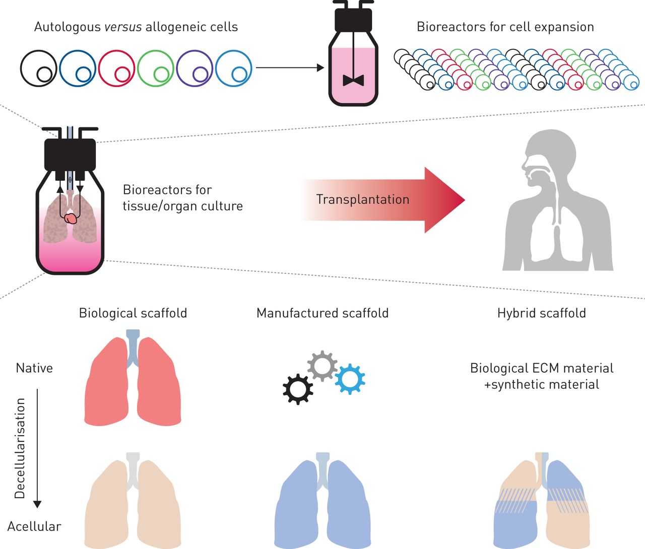 How to build a lung: latest advances and emerging themes in