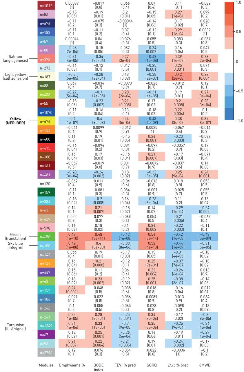 The DNA repair transcriptome in severe COPD   European