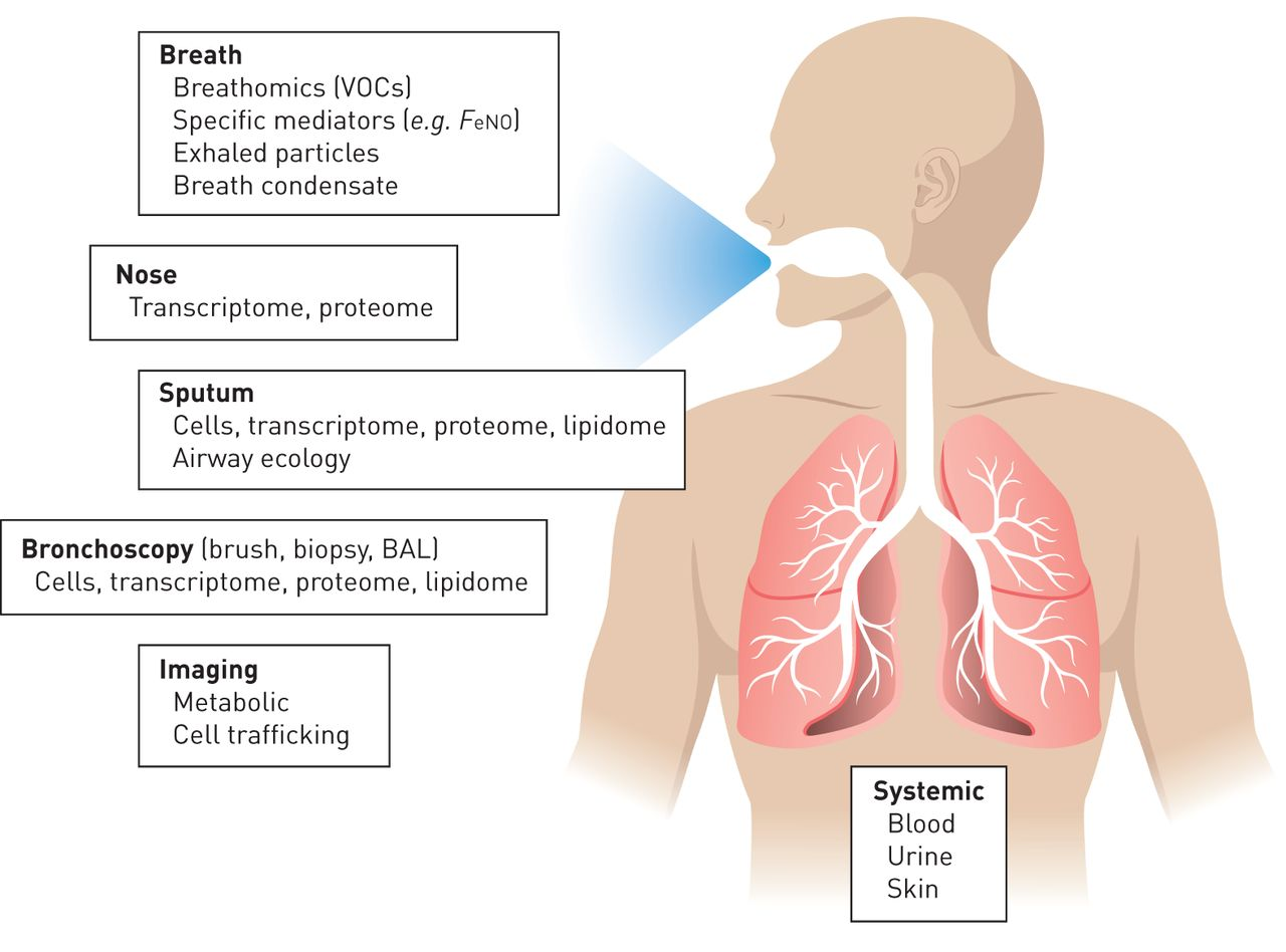 Airway inflammation in COPD: progress to precision medicine