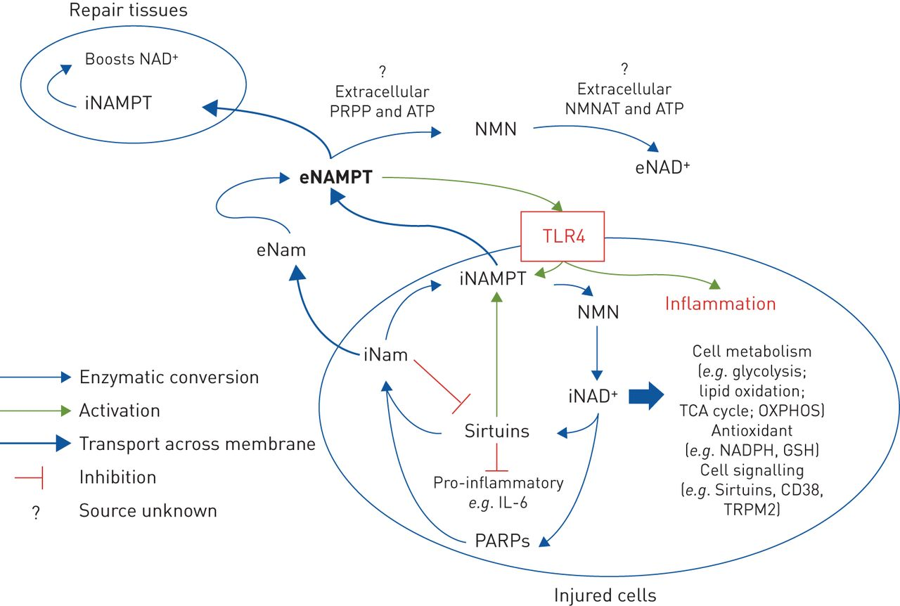 Salvaging the endothelium in acute respiratory distress syndrome ...