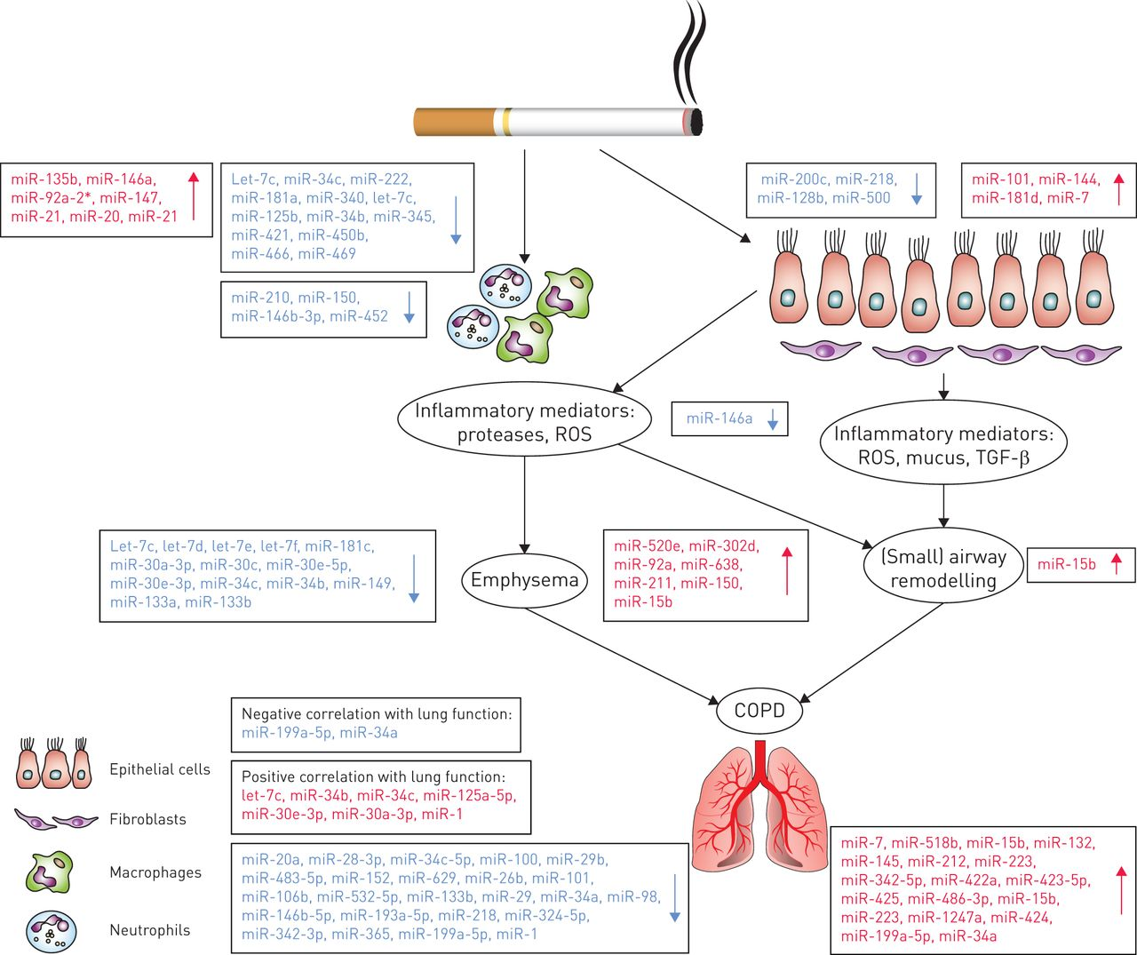 Unravelling the complexity of COPD by microRNAs: it's a small ...